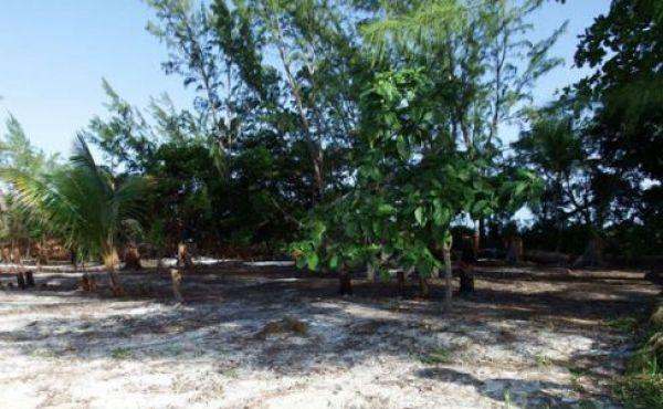 Sandy-Lot-with-some-mature-trees-1-488x326