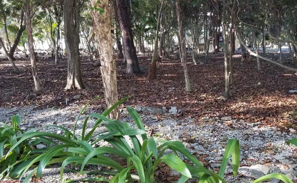 Silver-Gardens-11